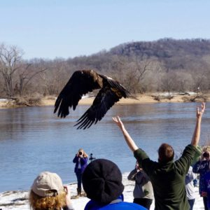 Eagle Release at VFW Prairie du Sac Photography by Kris Cunningham