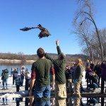 Eagle Release at VFW Prairie du Sac Photography by Kris Cunningham