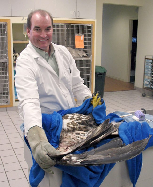 Sauk Prairie vet to share experiences treating eagles at Eagle Watching Days