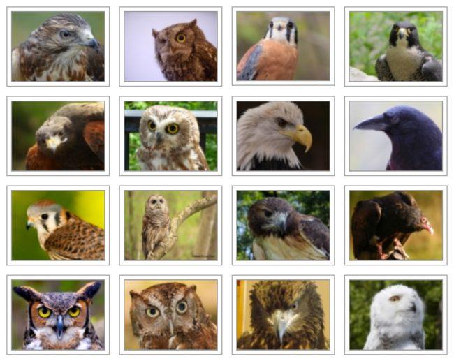 Schlitz Audubon Raptor Program